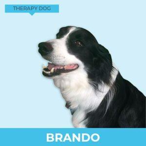 Brando – Therapy Dog